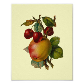 """Cherries and Apples"" Vintage Poster"