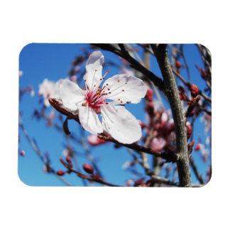 Cherry Blossom 2 Flexible Magnets