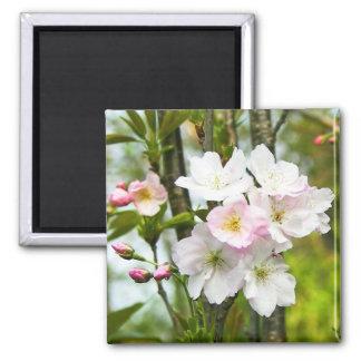 Cherry blossom 4 square magnet