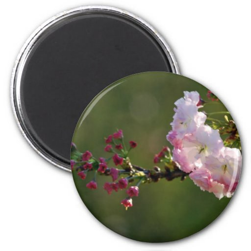 Cherry blossom and meaning magnets