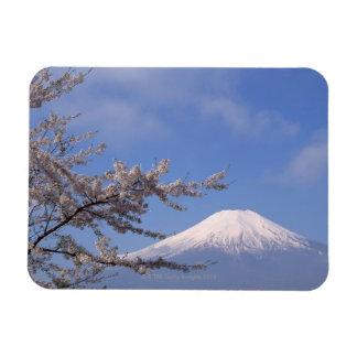 Cherry Blossom and Mt. Fuji 2 Magnet