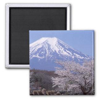 Cherry Blossom and Mt. Fuji Square Magnet