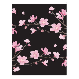 Cherry Blossom - Black Postcard
