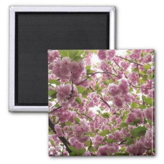 Cherry Blossom Canopy II Magnet