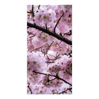 Cherry Blossom Canopy Personalised Photo Card
