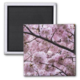 Cherry Blossom Canopy Square Magnet