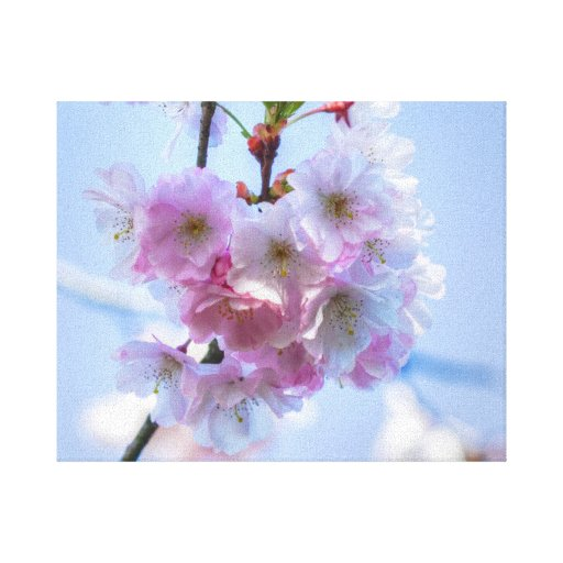 cherry blossom gallery wrapped canvas