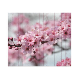 Cherry Blossom Stretched Canvas Prints