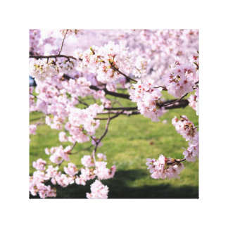 Cherry Blossom Canvas Canvas Prints