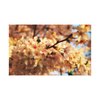 Cherry Blossom Canvas Gallery Wrapped Canvas