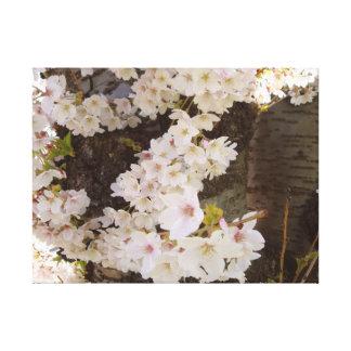 Cherry Blossom Cascade Canvas Prints