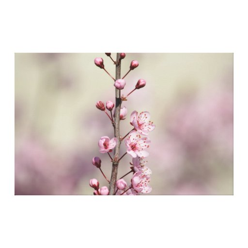 Cherry Blossom Flowers Gallery Wrap Canvas
