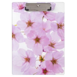 Cherry Blossom Flowers in Tokyo Japan Clipboard