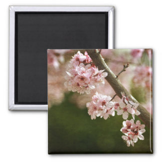 Cherry Blossom Flowers Square Magnet