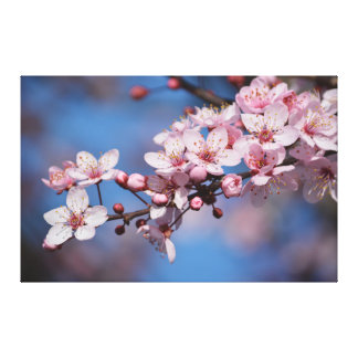 Cherry Blossom Flowers Stretched Canvas Prints