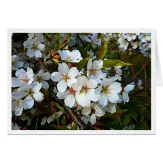 Cherry Blossom II Greeting Card