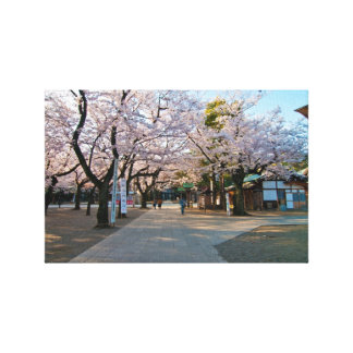 Cherry blossom in Japan Gallery Wrapped Canvas