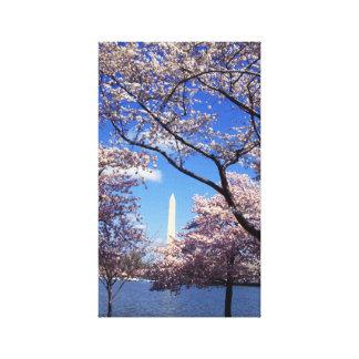 Cherry blossom in Washington DC Canvas Prints