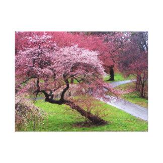 Cherry Blossom Lane Canvas Prints