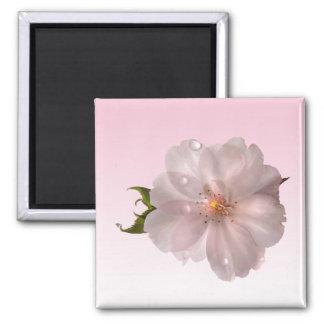 Cherry Blossom Square Magnet