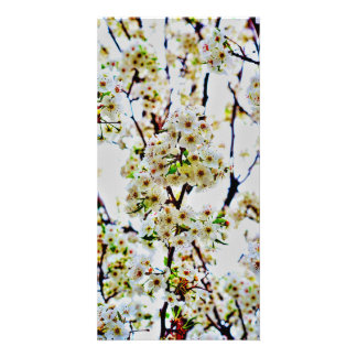 Cherry Blossom Photo Card