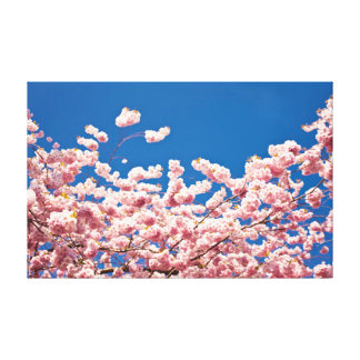 Cherry Blossom Pink Poster Stretched Canvas Prints