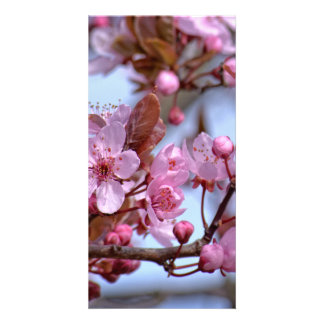 Cherry Blossom Pink Style Picture Card