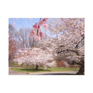 Cherry Blossom Road Canvas Prints