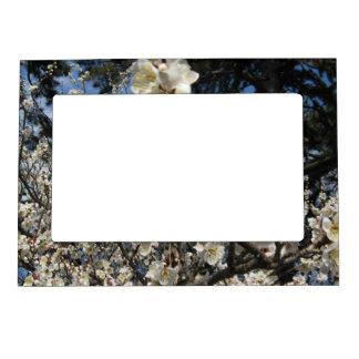 Cherry Blossom / Sakura / サクラ(桜) Magnetic Frame