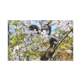 cherry blossom squirrels canvas print