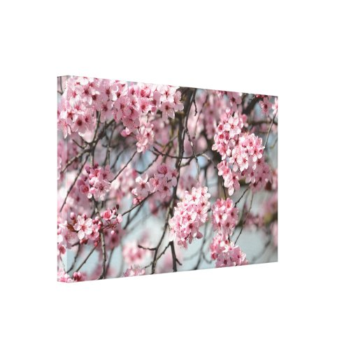 Cherry Blossom Tree Stretched Canvas Print