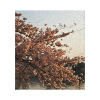 Cherry Blossom Tree Canvas Gallery Wrap Canvas
