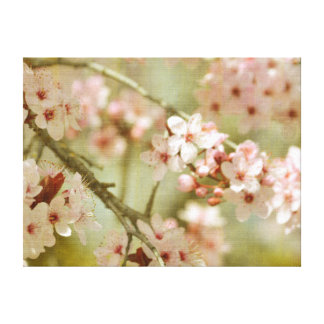 Cherry Blossom Tree Floral Canvas Print