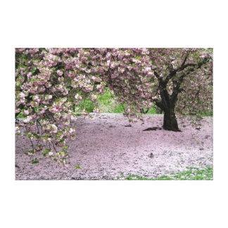 cherry blossom tree wrapped canvas gallery wrapped canvas
