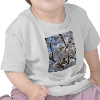 Cherry Blossom T Shirt