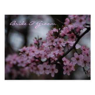 Cherry Blossom Wedding Postcard