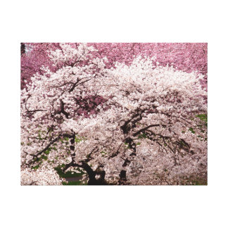 Cherry Blossom Wonderland Canvas Print