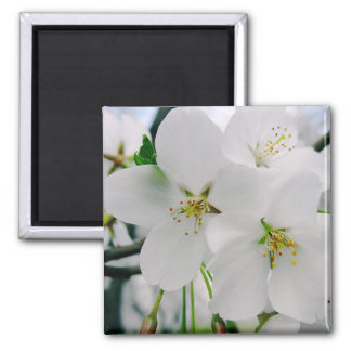 Cherry Blossoms 4 Magnet
