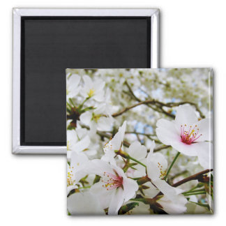 Cherry Blossoms 5 Magnet