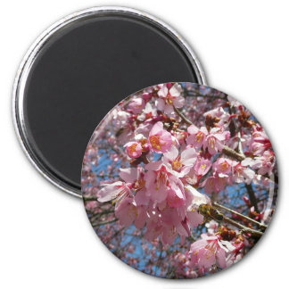 Cherry Blossoms and Bee Pink Spring Floral 6 Cm Round Magnet