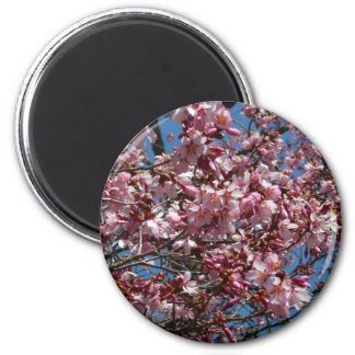 Cherry Blossoms and Blue Sky Spring Floral 6 Cm Round Magnet