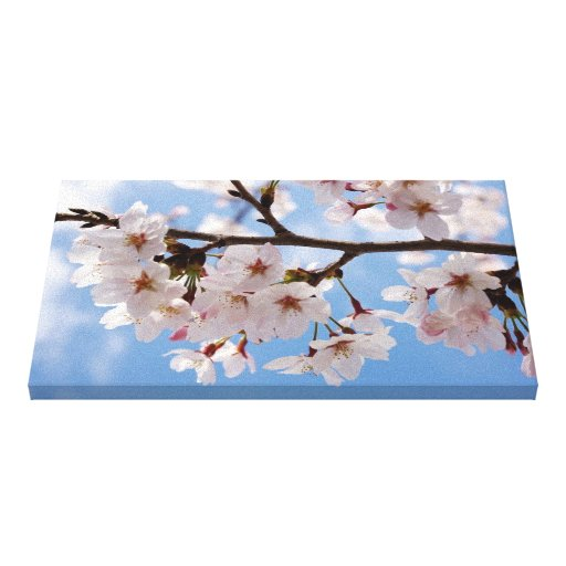 Cherry blossoms and light-blue sky stretched canvas prints