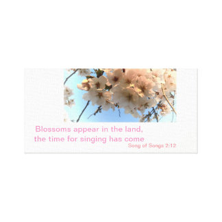 Cherry Blossoms and Song of Songs Canvas Print