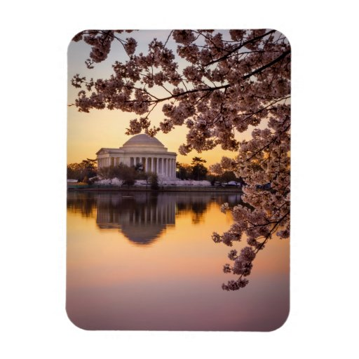 Cherry Blossoms And The Jefferson Memorial Rectangular Magnet