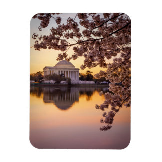 Cherry Blossoms And The Jefferson Memorial Rectangular Photo Magnet
