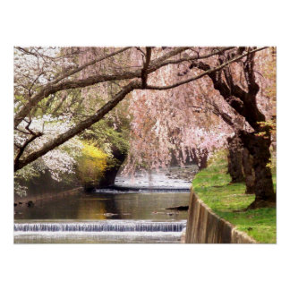 Cherry Blossoms by the Mill Stream Poster