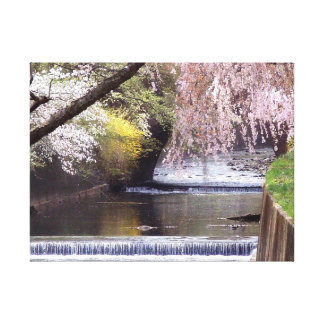 Cherry Blossoms by the Old Mill Stream Gallery Wrap Canvas