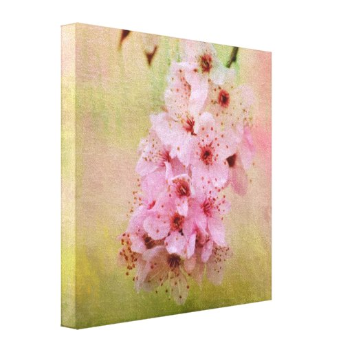 Cherry Blossoms Stretched Canvas Prints
