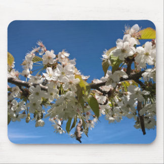 Cherry blossoms floral spring photo mousepad