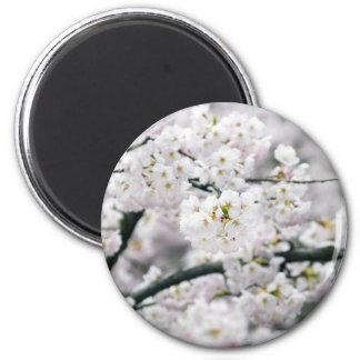 Cherry Blossoms Fridge Magnets